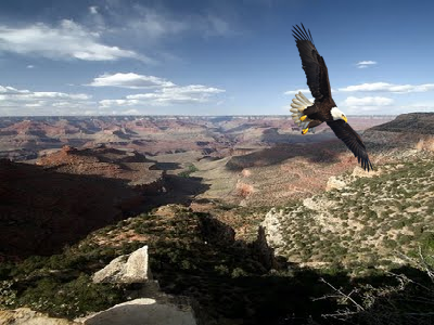 The Same Eagle Is in All These Pictures