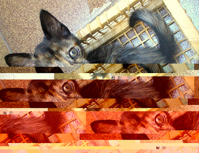 a recombination of Glitch Art, LOLCATs, folksonomies + Flickr photos